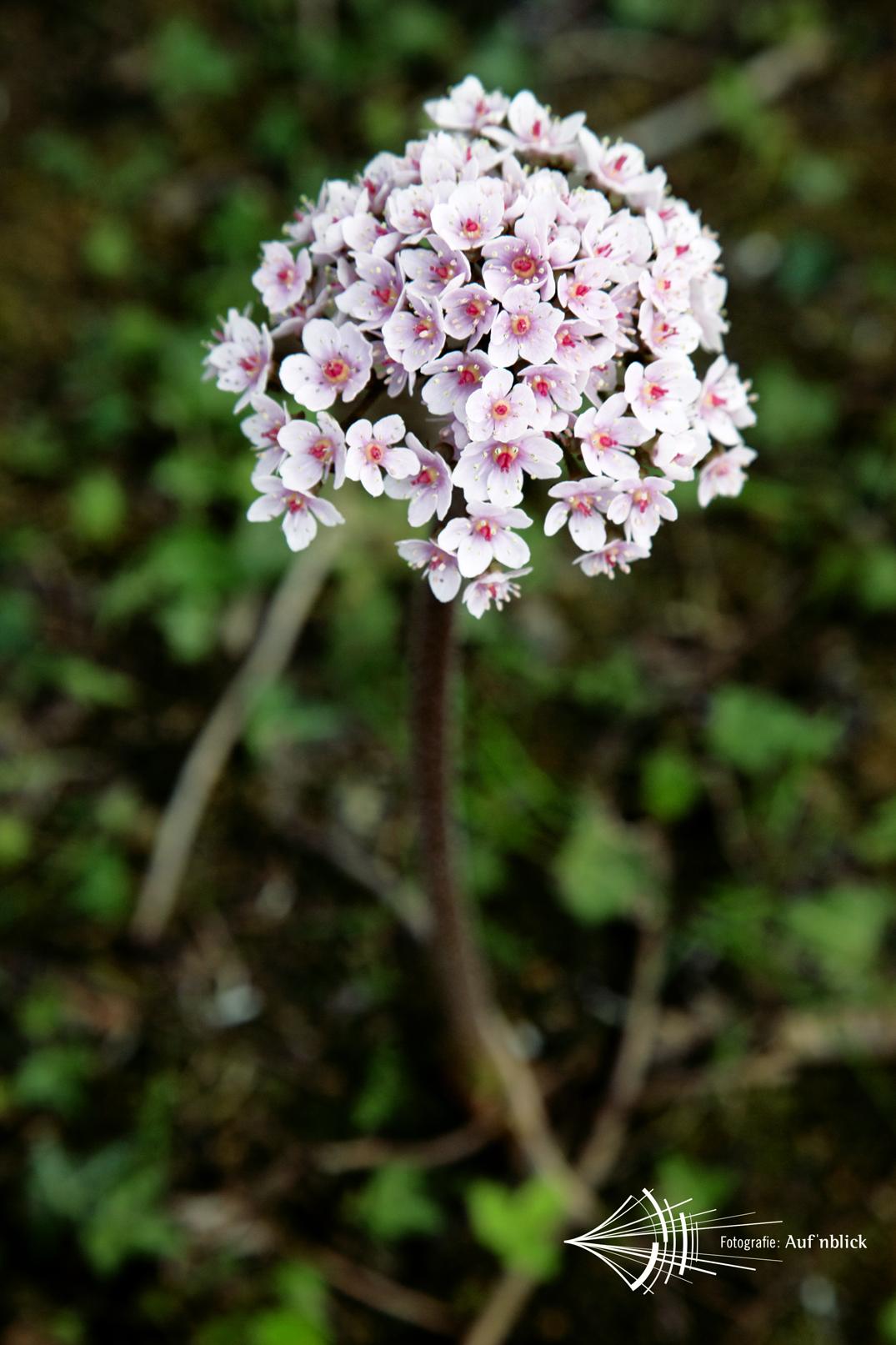 #flowerpop